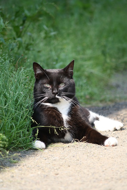 Buitenkat houdt de wacht