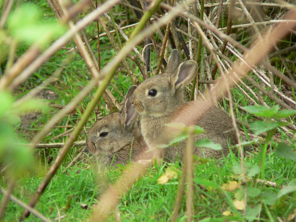 Geef moederloze konijntjes en haasjes een tweede kans