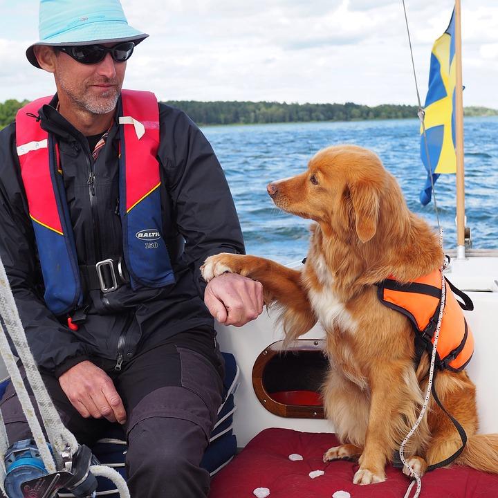 Contact tussen hond en baas