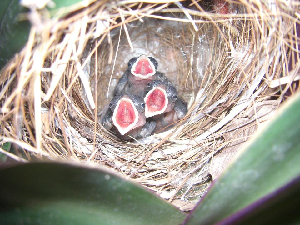 Nestvogeltjes