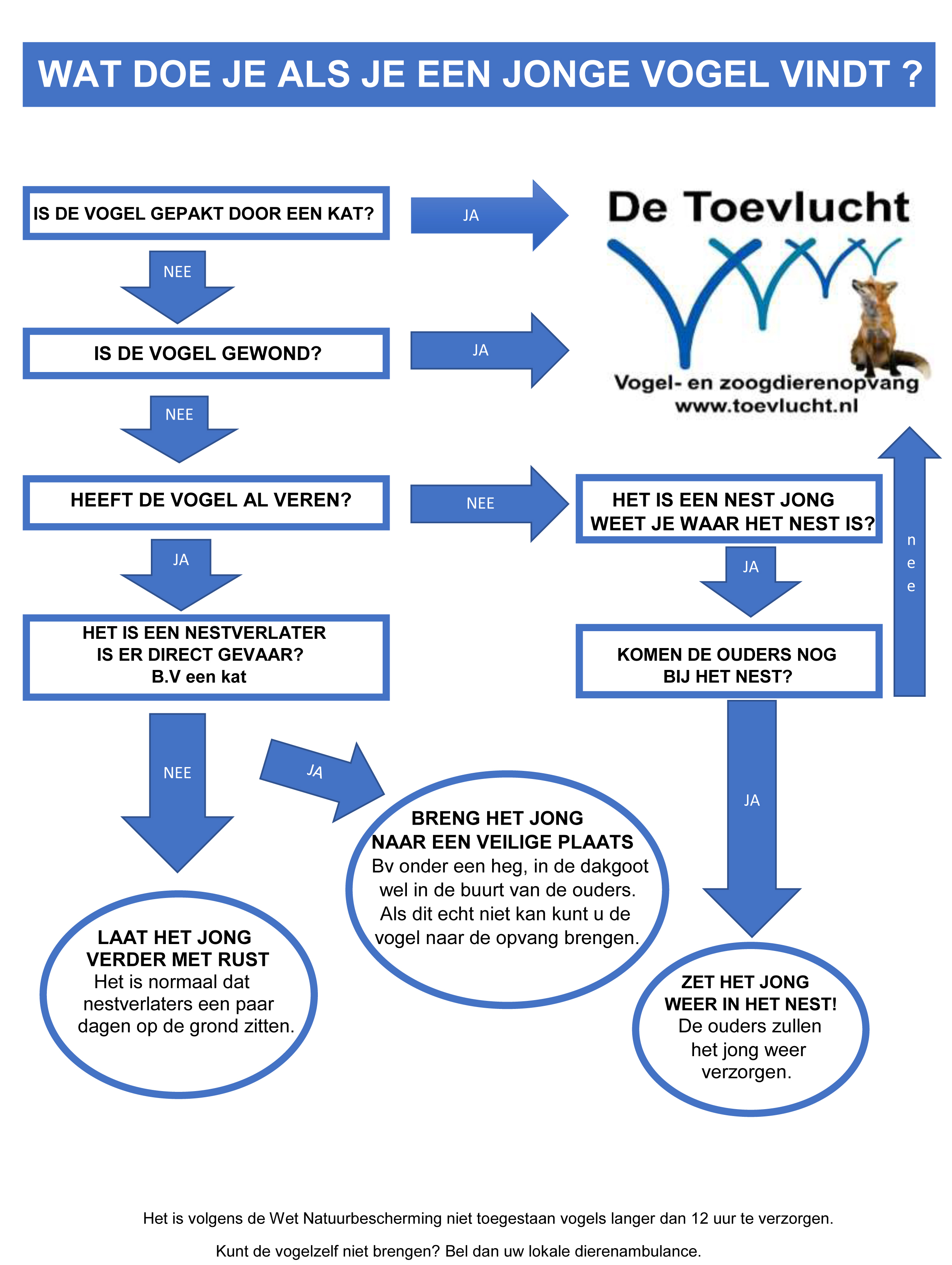 Stroomdiagram vogelopvang - Wat doe je als je een jonge vogel vindt?